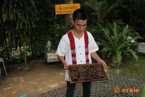 55-big-bee-05.jpg