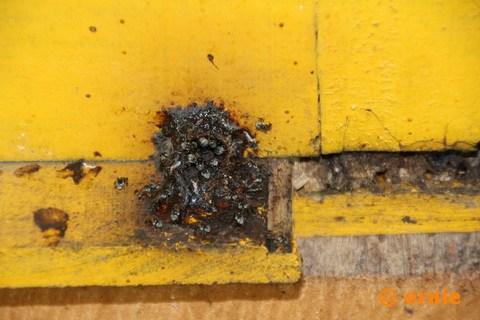 55-big-bee-14.jpg