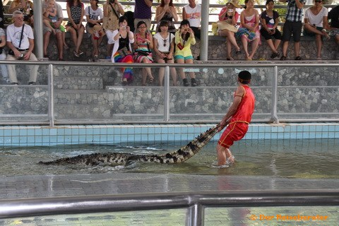 14-crocodile-farm-mit-thomas-029.jpg