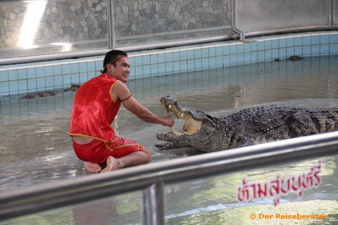 14-crocodile-farm-mit-thomas-034.jpg