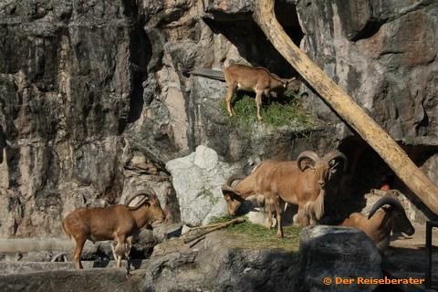 19-khao-kheow-open-zoo-093.jpg