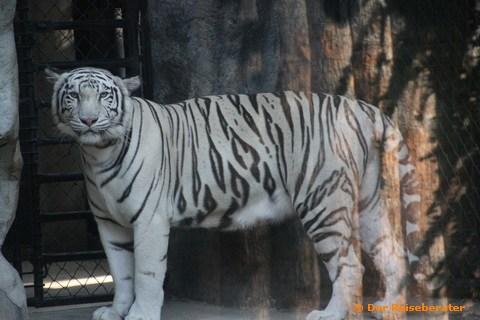 19-khao-kheow-open-zoo-101.jpg