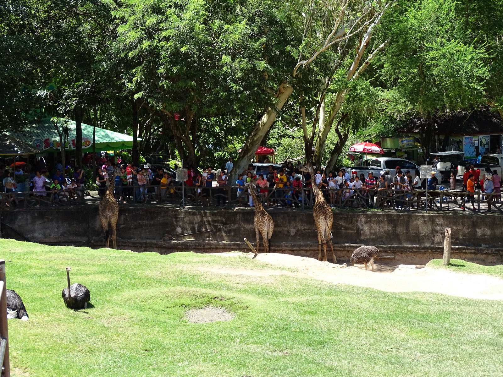 21 Khao Kheow Open Zoo 26