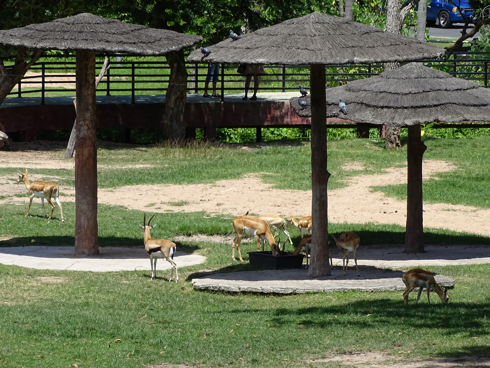 21 Khao Kheow Open Zoo 27
