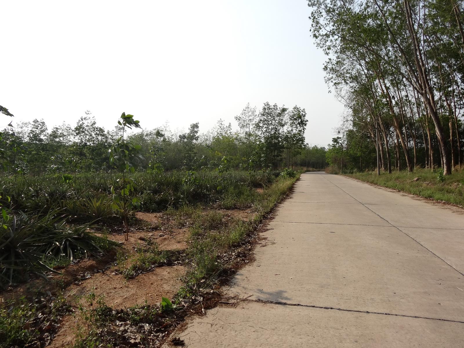 01 Pattaya 062