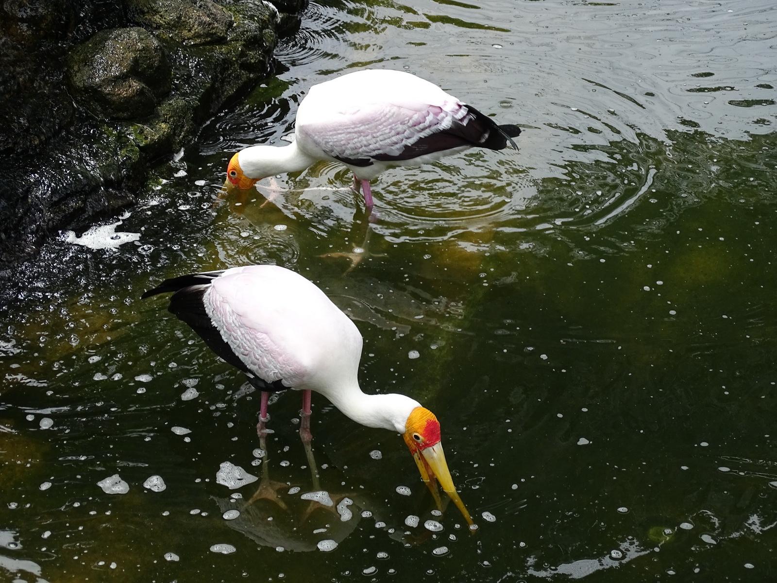 05 KL Bird Park 04