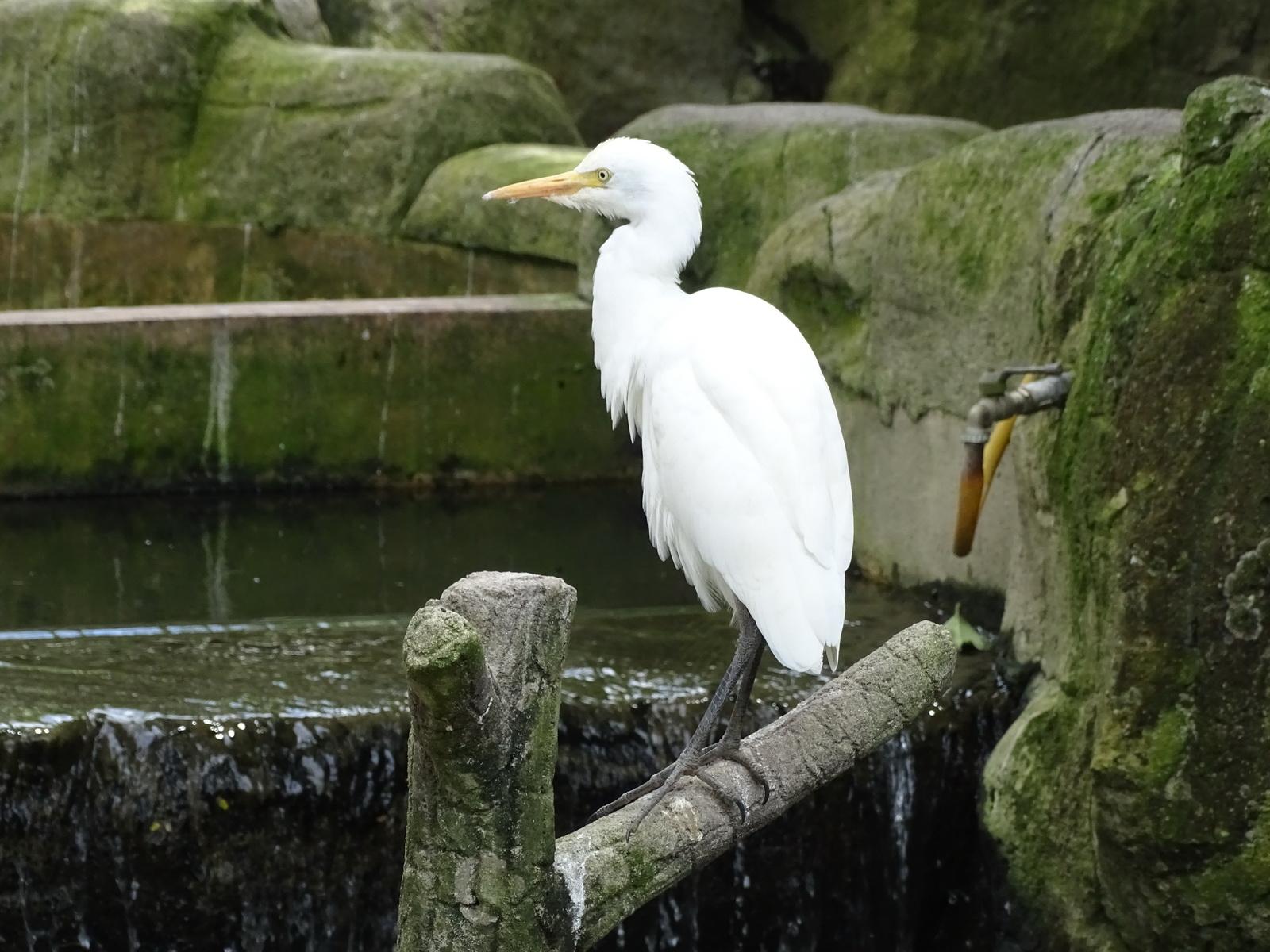 05 KL Bird Park 07
