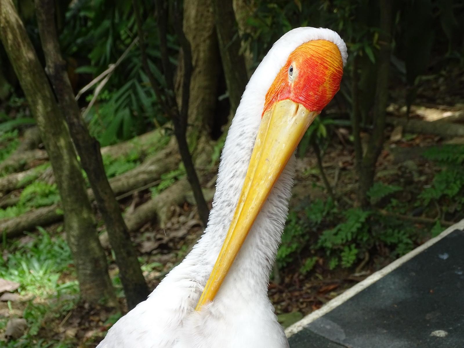 05 KL Bird Park 09