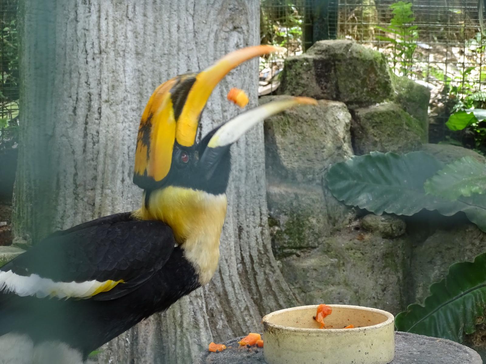 05 KL Bird Park 12