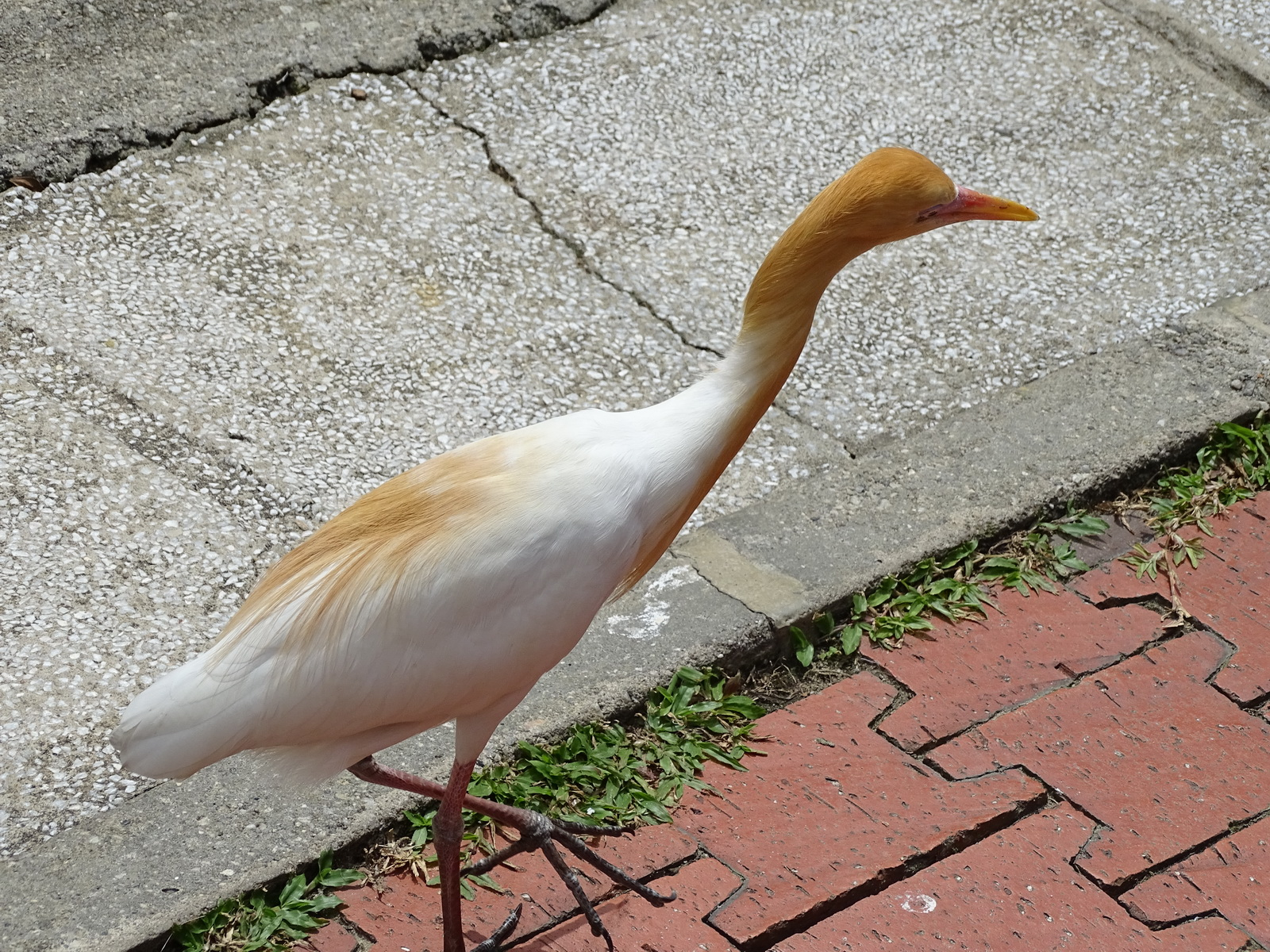 05 KL Bird Park 13