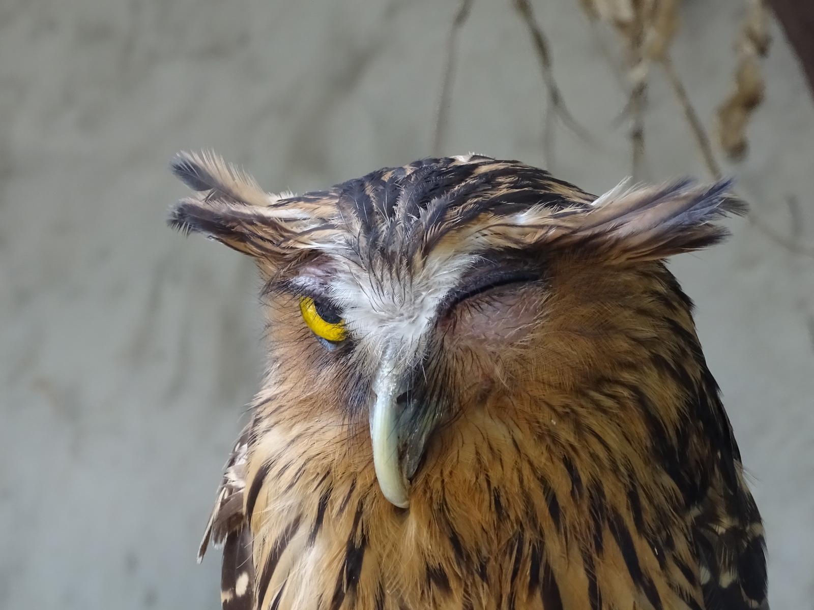 05 KL Bird Park 15
