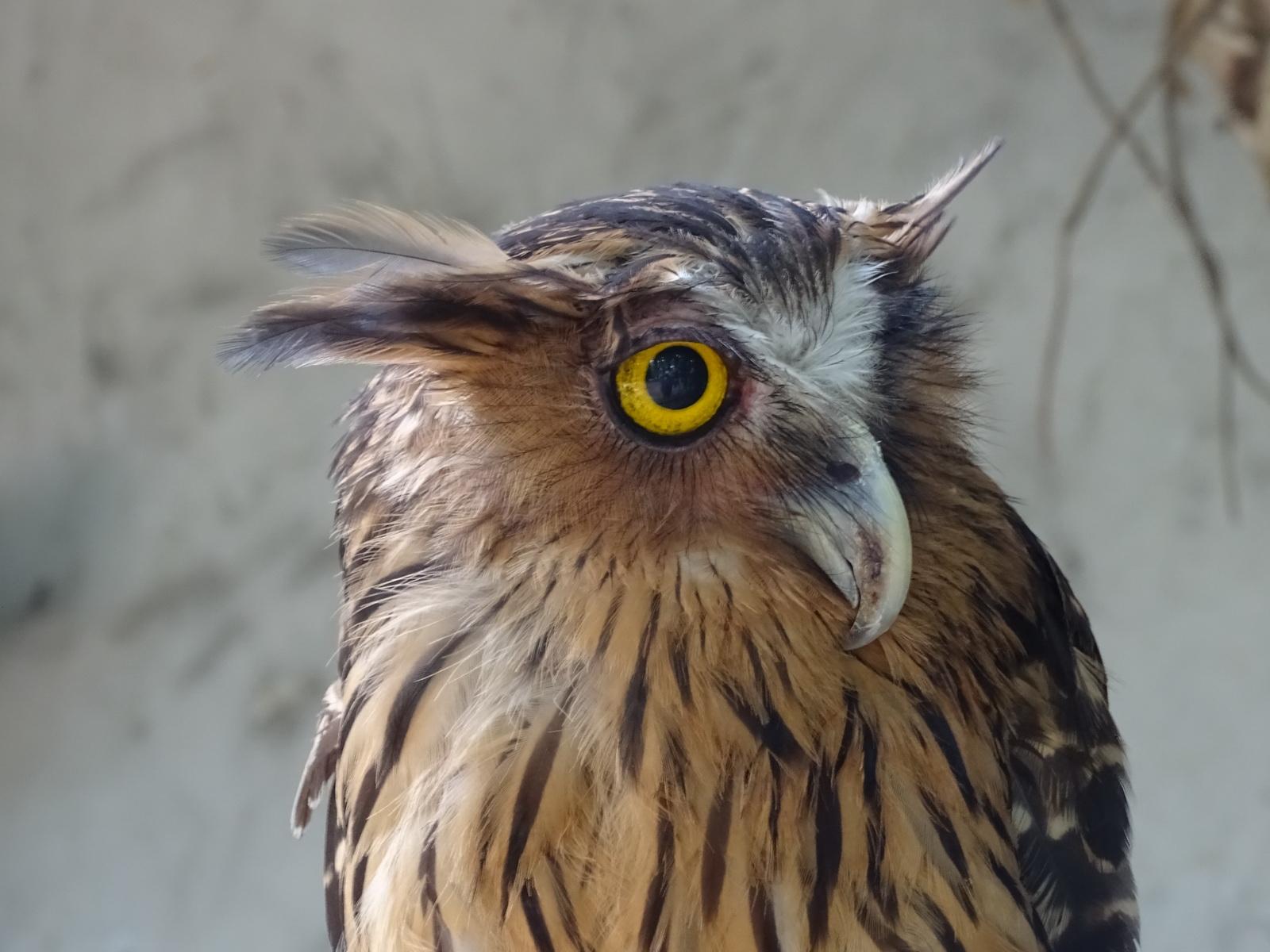 05 KL Bird Park 16