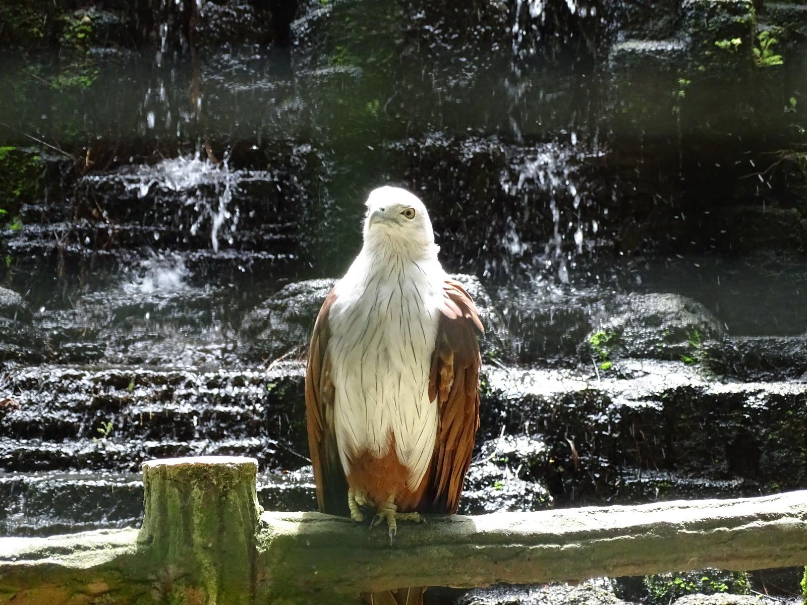 05 KL Bird Park 20