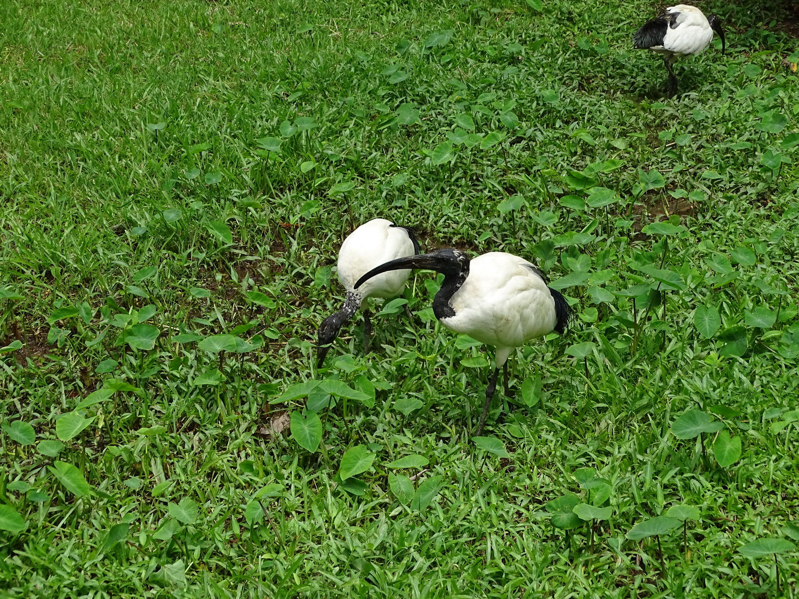 05 KL Bird Park 26