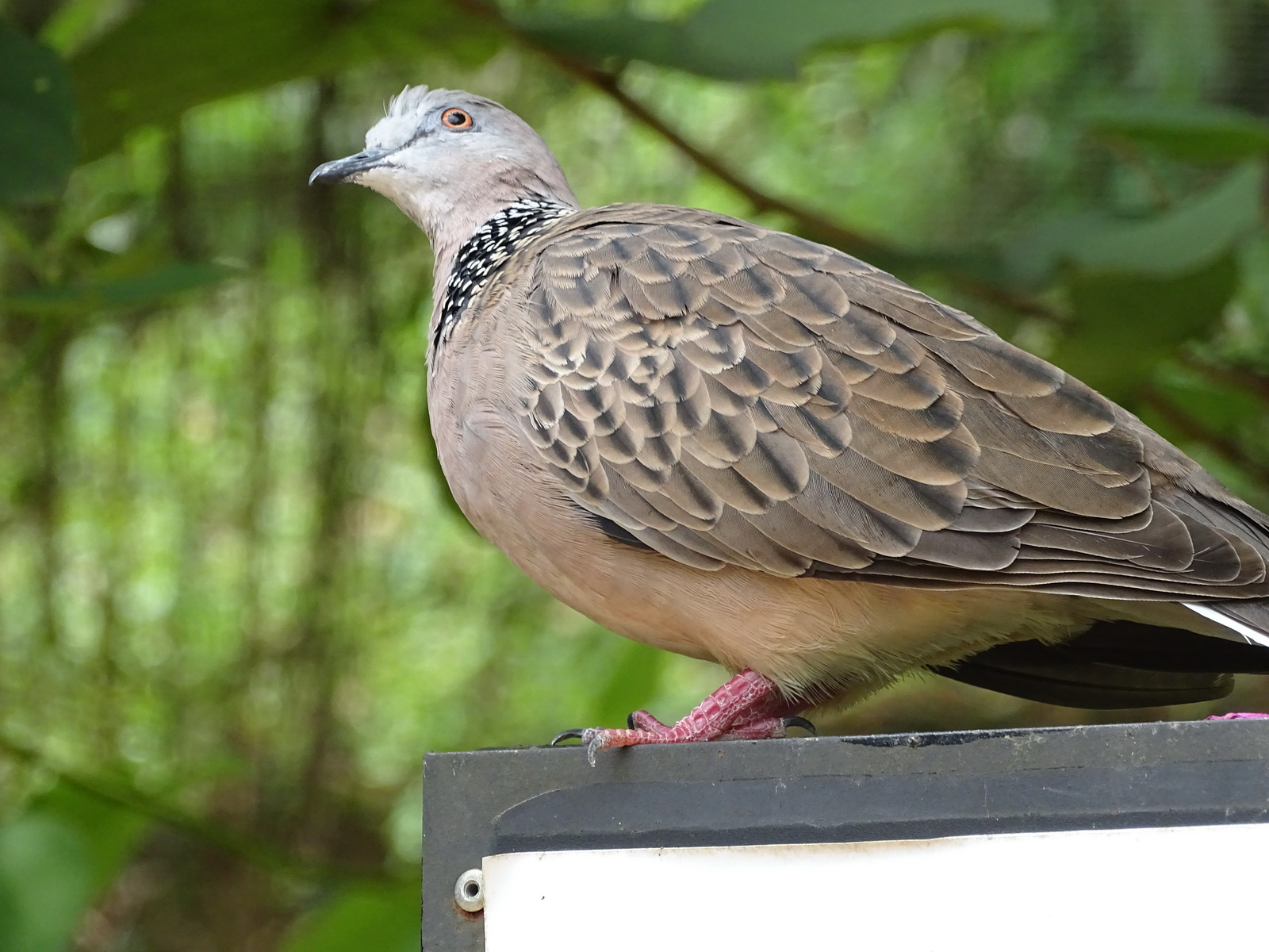 05 KL Bird Park 30