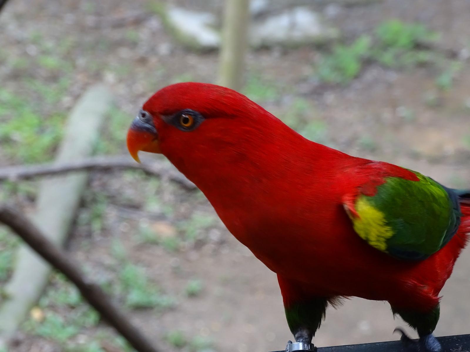 05 KL Bird Park 46