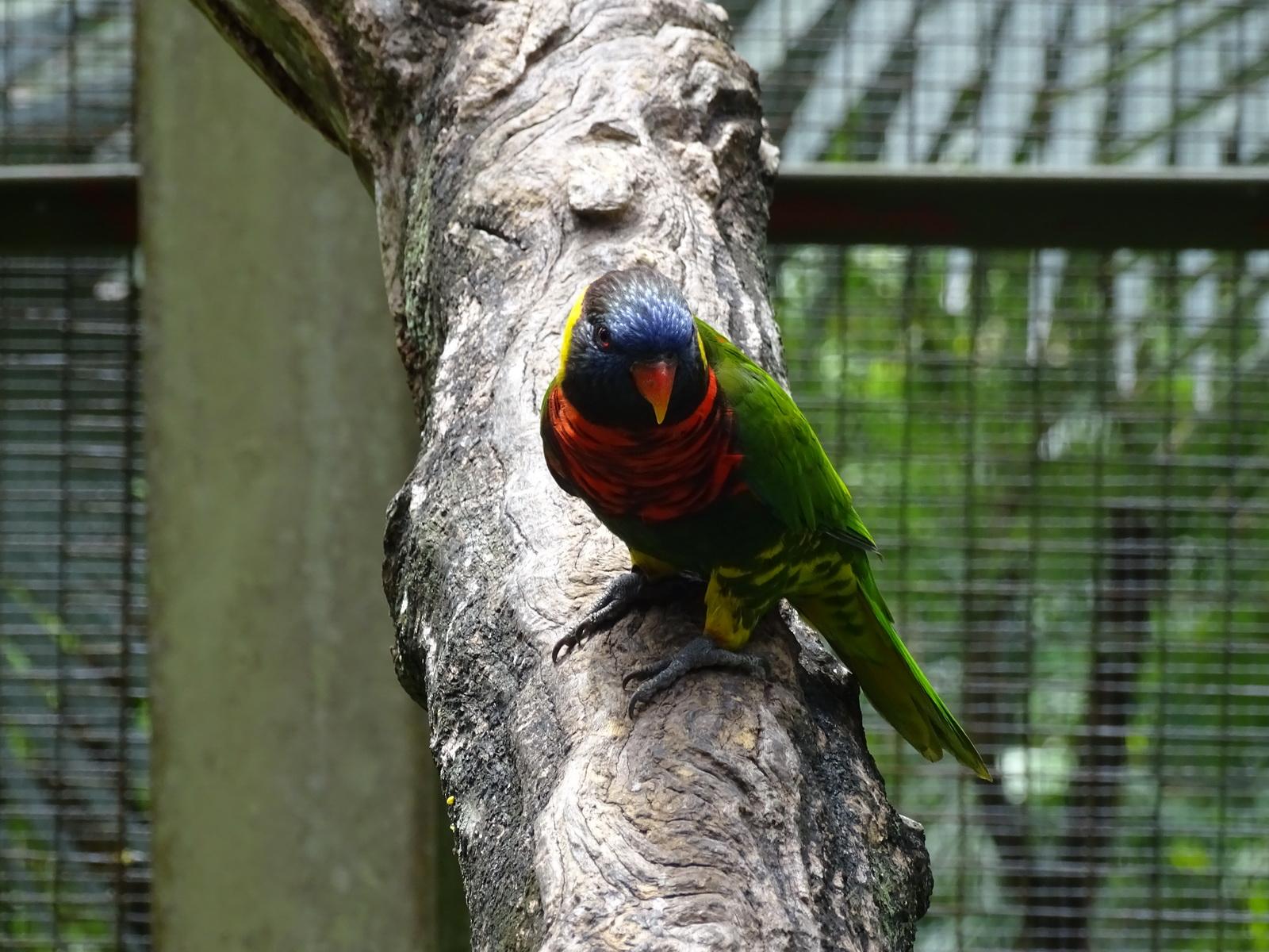 05 KL Bird Park 50