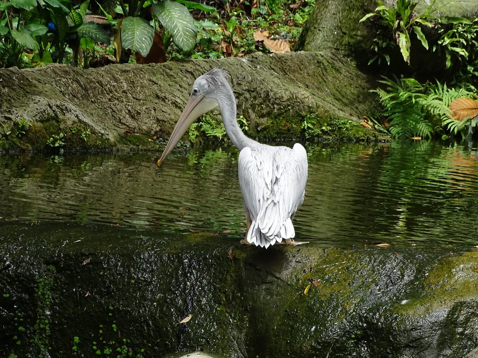 05 KL Bird Park 59