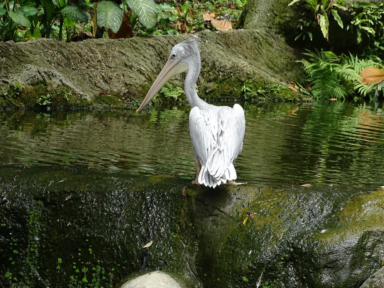 05 KL Bird Park 60