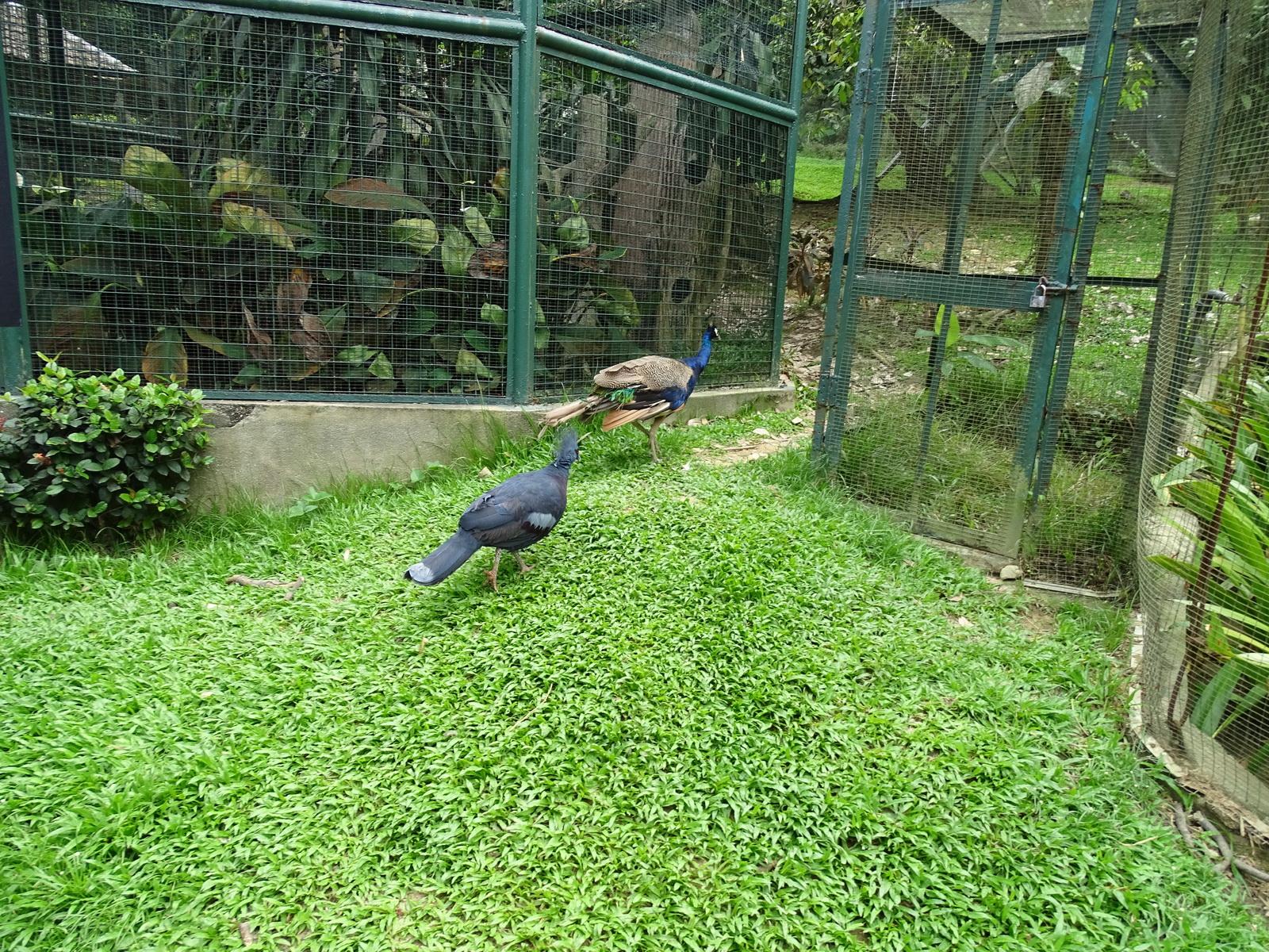 05 KL Bird Park 65